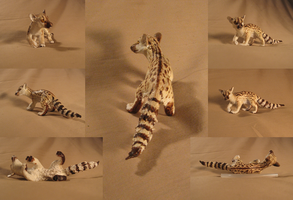 African Genet by bolthound