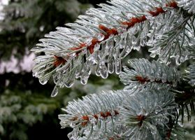 Frozen Evergreen by paintintheneck