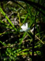 flower from flordia by beastibug