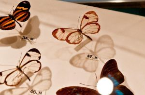 moths and butterflies stock146 by hatestock