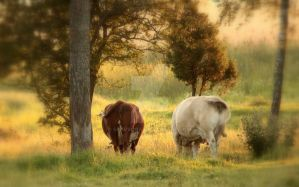 Summer evening in the cow pasture. by Sparvoga