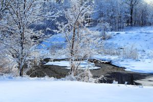 Trees by the Stream in Winter by Celem