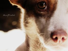 Doggy by MaryBrodzeli