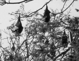 the bat tree by aesthetique