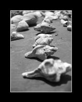 SEA SHELLS 3 by mysticblue133