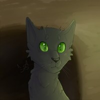 Hollyleaf by Shimmerspirit