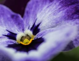 heart of a viola by clochartist-photo