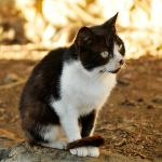 Croatian kitty at Hvar Town 2 by wildplaces