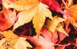 Shades of Fall by Wes2299