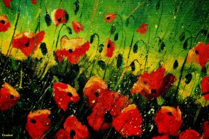 red orange poppies by pledent