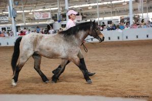 Roan Pony Stock 2 by lee-mare