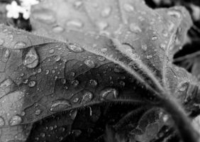 Black and White Droplets by KayTeez
