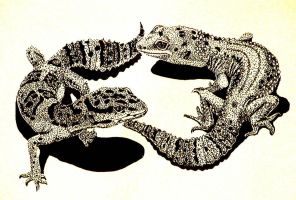 Two Leopard Geckos by Ellygator