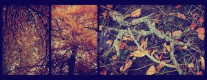 Autumn Leaves Triptych by MagpieMagic