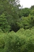 View of bamboos forest from iron bridge by A1Z2E3R