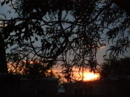 Sunset through the Branches by AngelofNightmareRelm