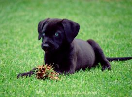 Eating grass.. by Zafi