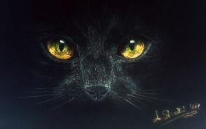 black cat (negative conversion) inverted zoom by Angesik
