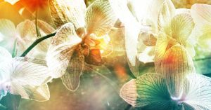 July's Orchids by brianson