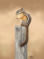 Chipmunk by niveky