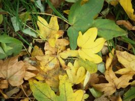 Autumn leaves_2 by MunsenTheBiscuit69