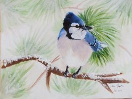 Winter Blue Jay by AthenaMyth