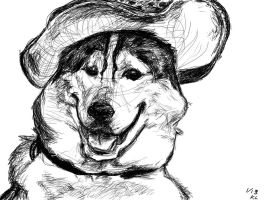 Husky With a Hat by xXpounceXx