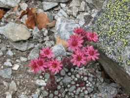 Rocks's flowers by Momotte2