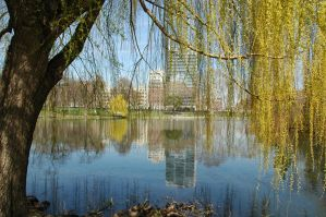 weeping willow by nyx1564
