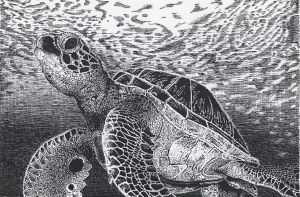 Pen and Ink Sea Turtle by Albino-Phoenix