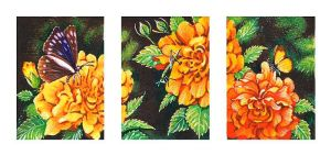 Insect Triptych ACEO by rinaswan