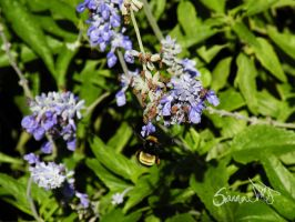 Busy Bumble Bee by siannajmj