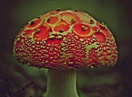 A TOADSTOOL FAIRYTALE by marjol3in1977