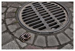 Of donuts and sewer grids by wchild