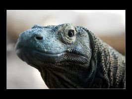 Komodo Dragon 1 by acojon