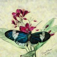Key West  Butterfly 1 by dqmorrow