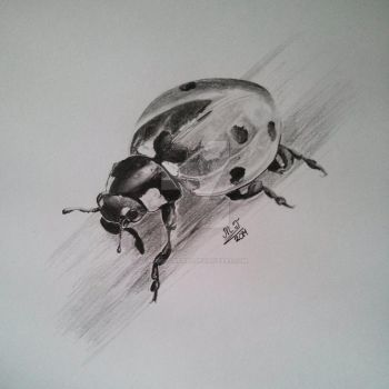 Lady Bug by HorseArtistt