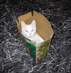 Cat in a Box by Xennifer