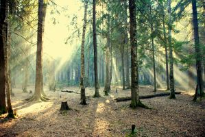 Forest series-Russian forest2 by takiostavim