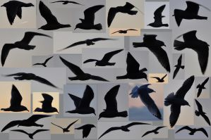 lb1-162 seagull silhouettes by bstocked