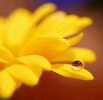 Yellow. by ambersome