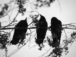 three crows by kataryna-damacy