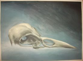 Bird Skull Study #1 - Completed by Contrast-and-Colour