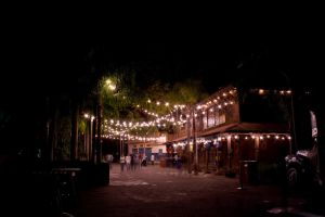 Animal Kingdom at Night 59 by AreteStock