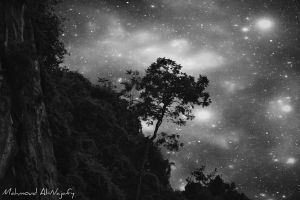 As the sky illuminates my lonely tree BW by ~P3rL-Saint