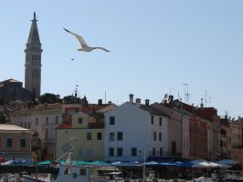 Seagull over Rovinj by raff34