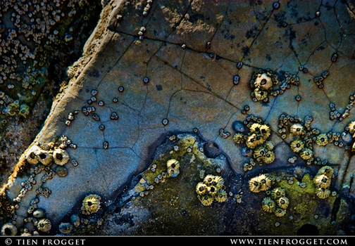 Barnacles on a Rock by tienlove