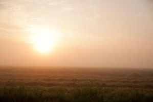 Background Summer Morning by Kia01-Stock