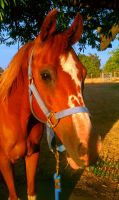 Horse Stock 0034 by angry-stock-for-life