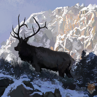 Mountain Elk by diego1a